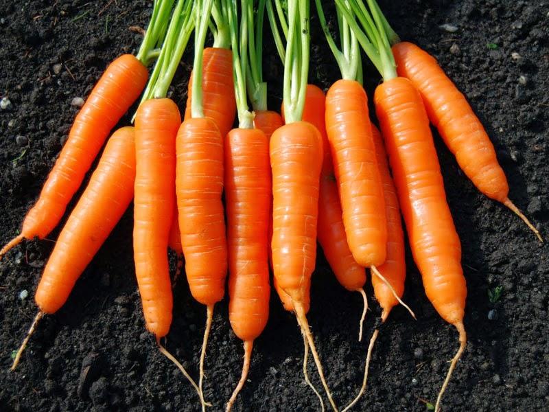 manfaat dari wortel