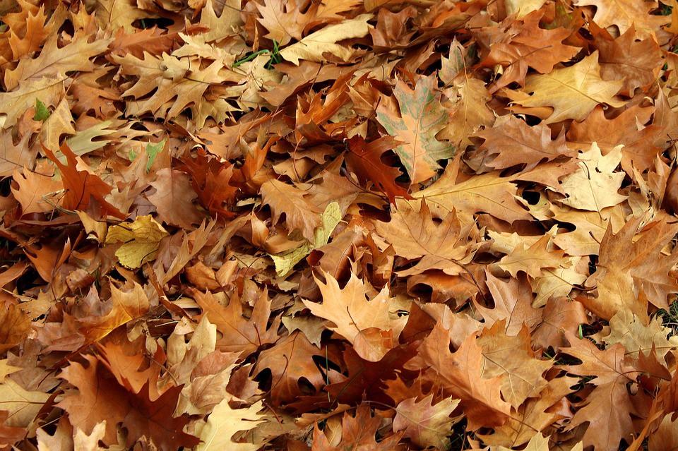 cara membuat pupuk kompos dari daun kering