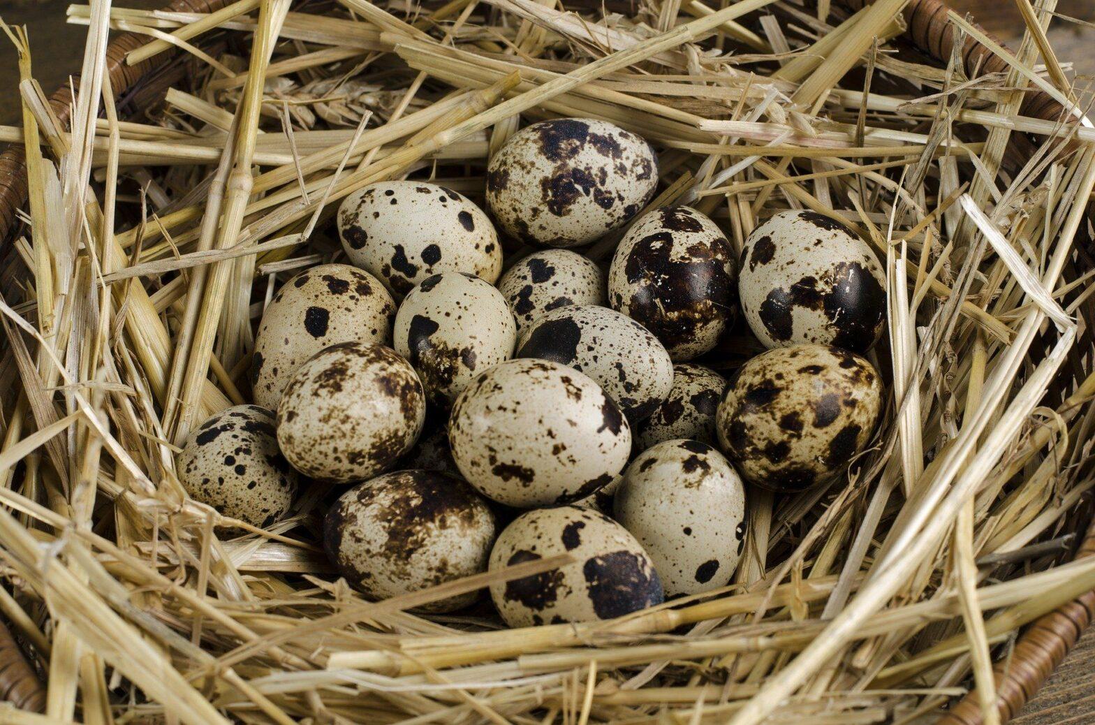 resep-semur-telur-yang-enak