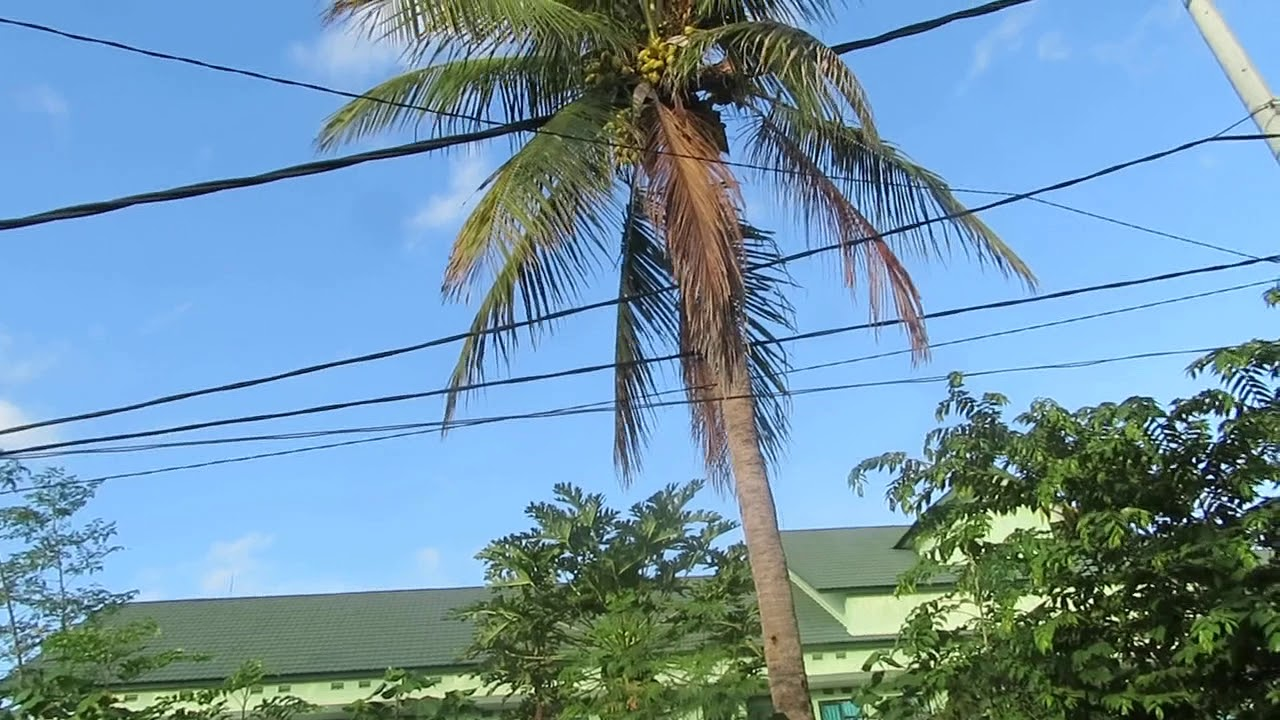 fungsi bagian pohon kelapa