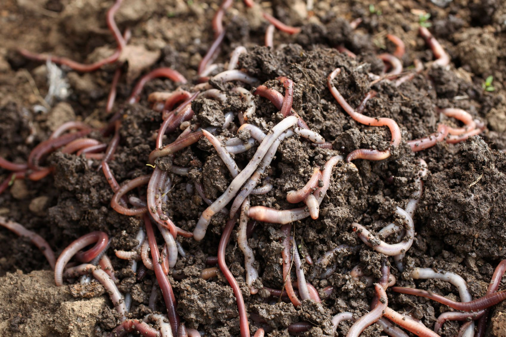 cara mengolah sampah organik menjadi kompos